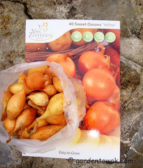 sweet onion sets (08965)