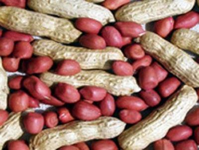 valencia_peanut_seeds_organicweblarge